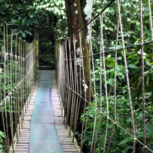 Rope Bridge Rain Forest