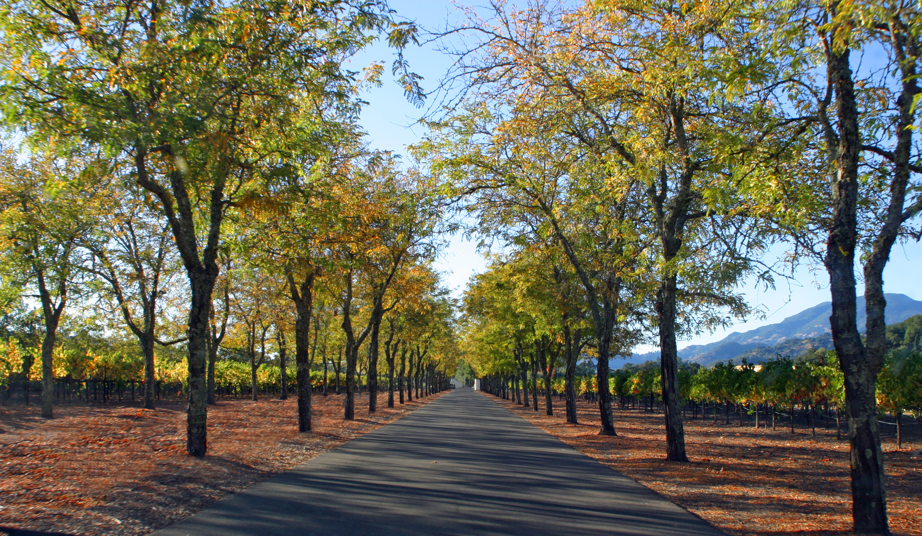 Sterling Vinyards